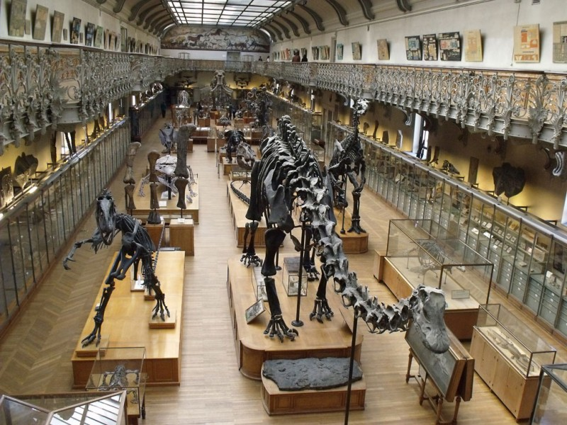 musee-histoire-naturelle-chambery