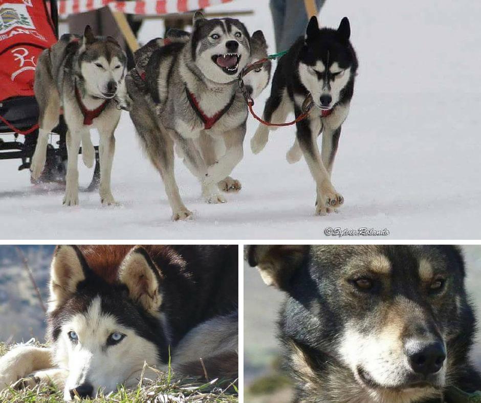 pierre-duran-musher-chiens