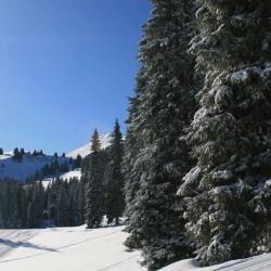 Ch�tel, le ski sur le domaine des Portes du Soleil
